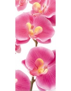 Fotomural Pink Orchid